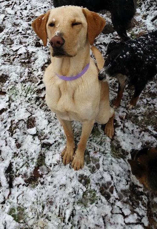 Milo  first snow